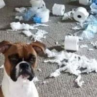 COVID19: les chiens en profitent!